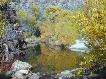 Fall Foliage Brings out Shutterbugs thumbnail