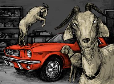 Losses and Lessons: Goat bites pony car thumbnail
