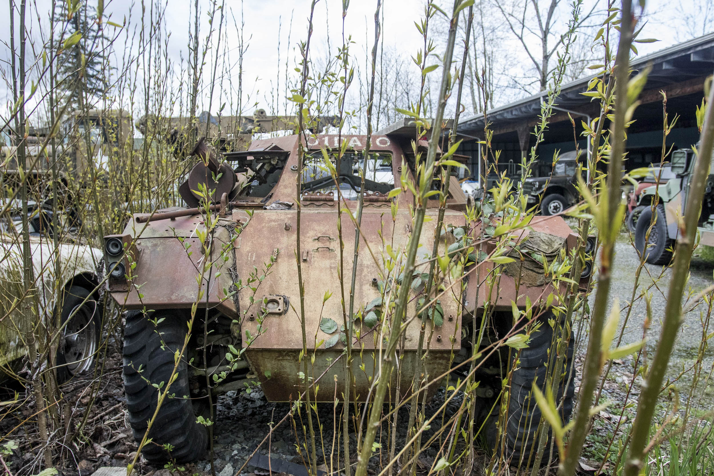 Surrounded by undergrowth, an unidentified armored car (probably a Daimler Ferret) awaits restoration.