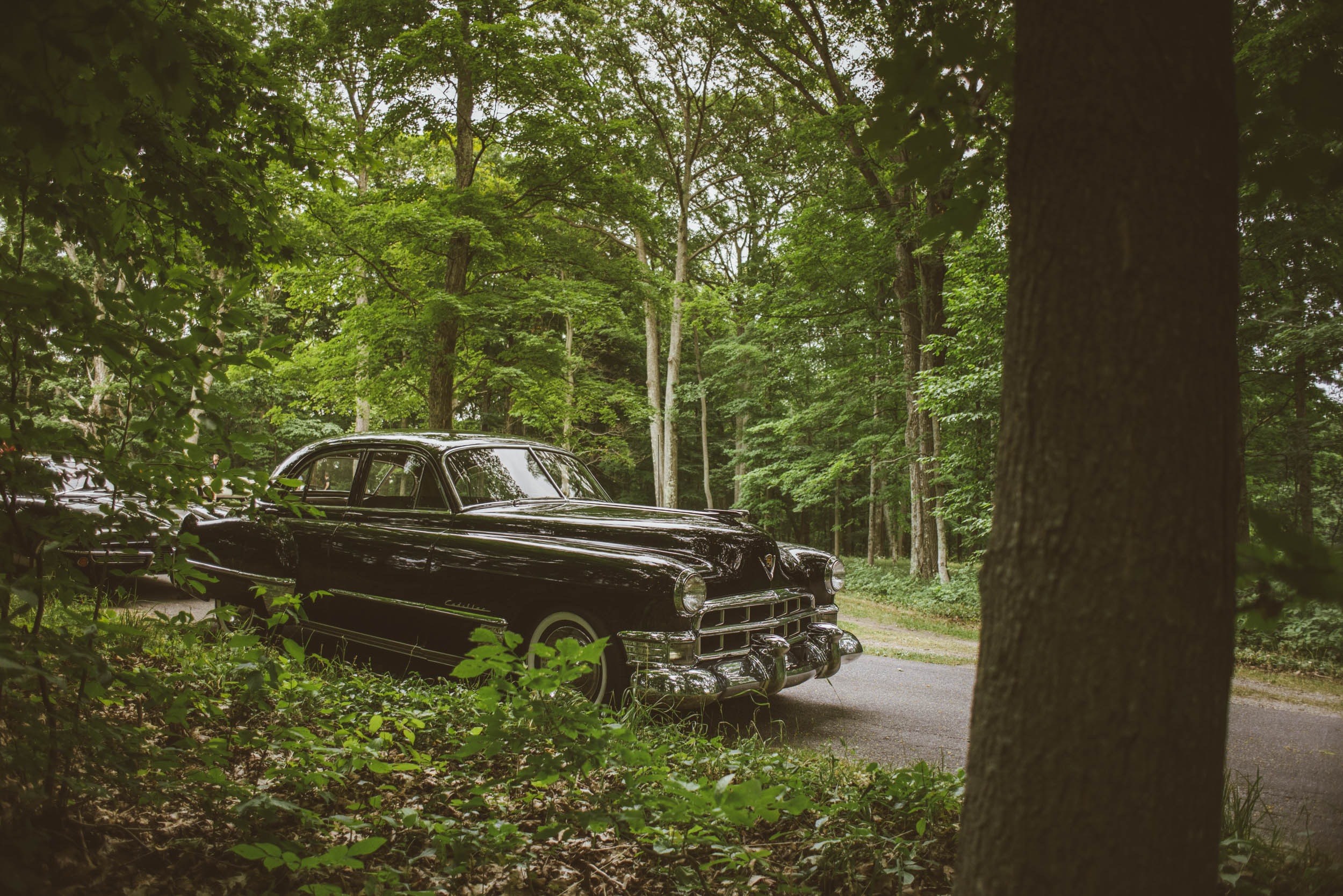 1949 cadillac in the woods