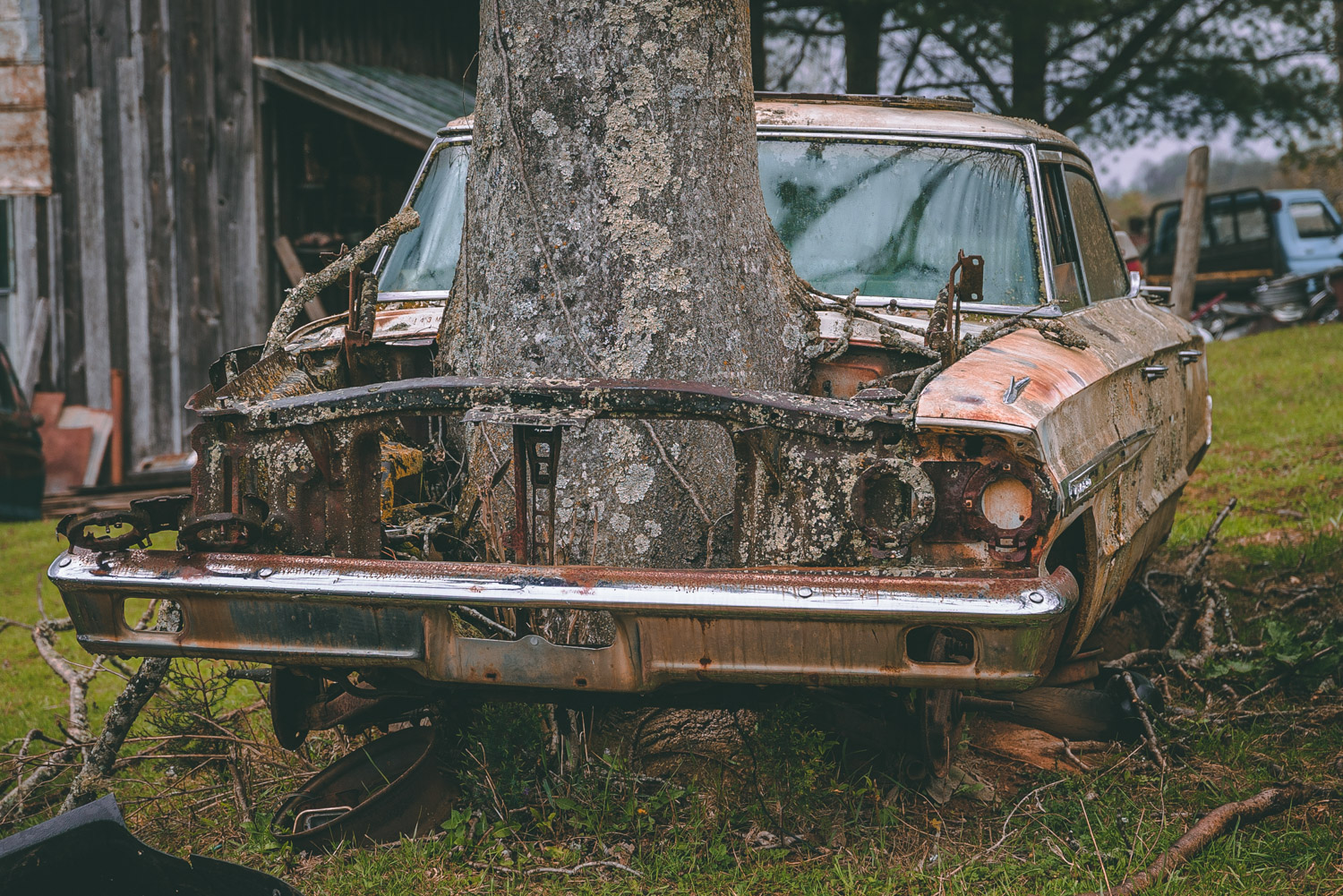 Barn Find Hunter big tree up close