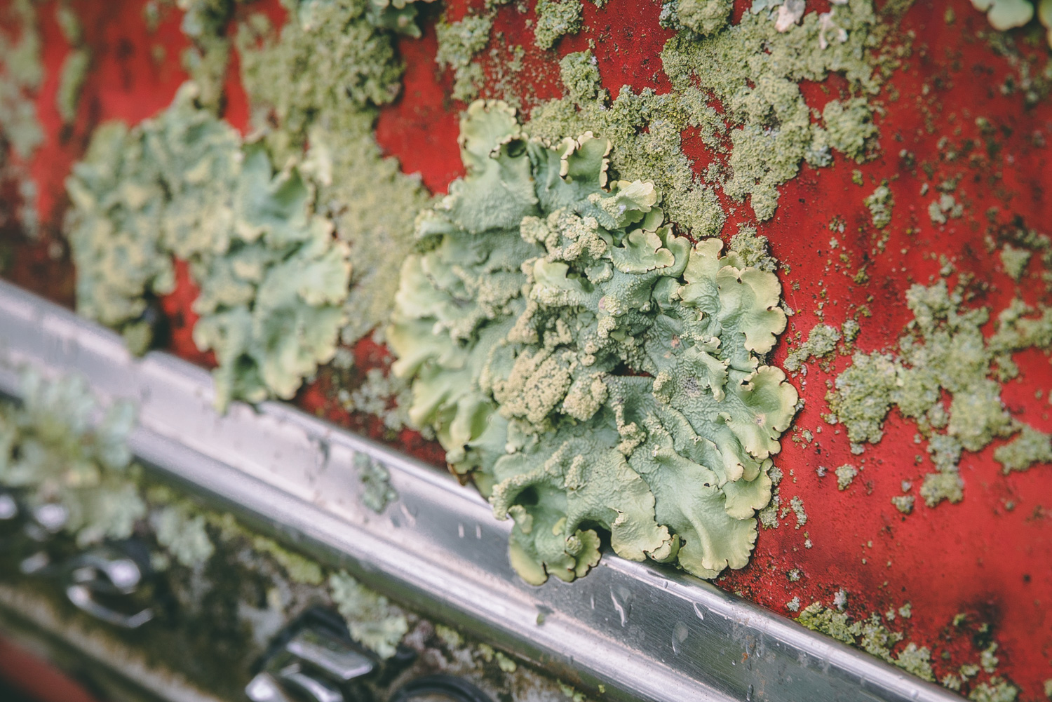 Barn Find Hunter moss lichen growth on car