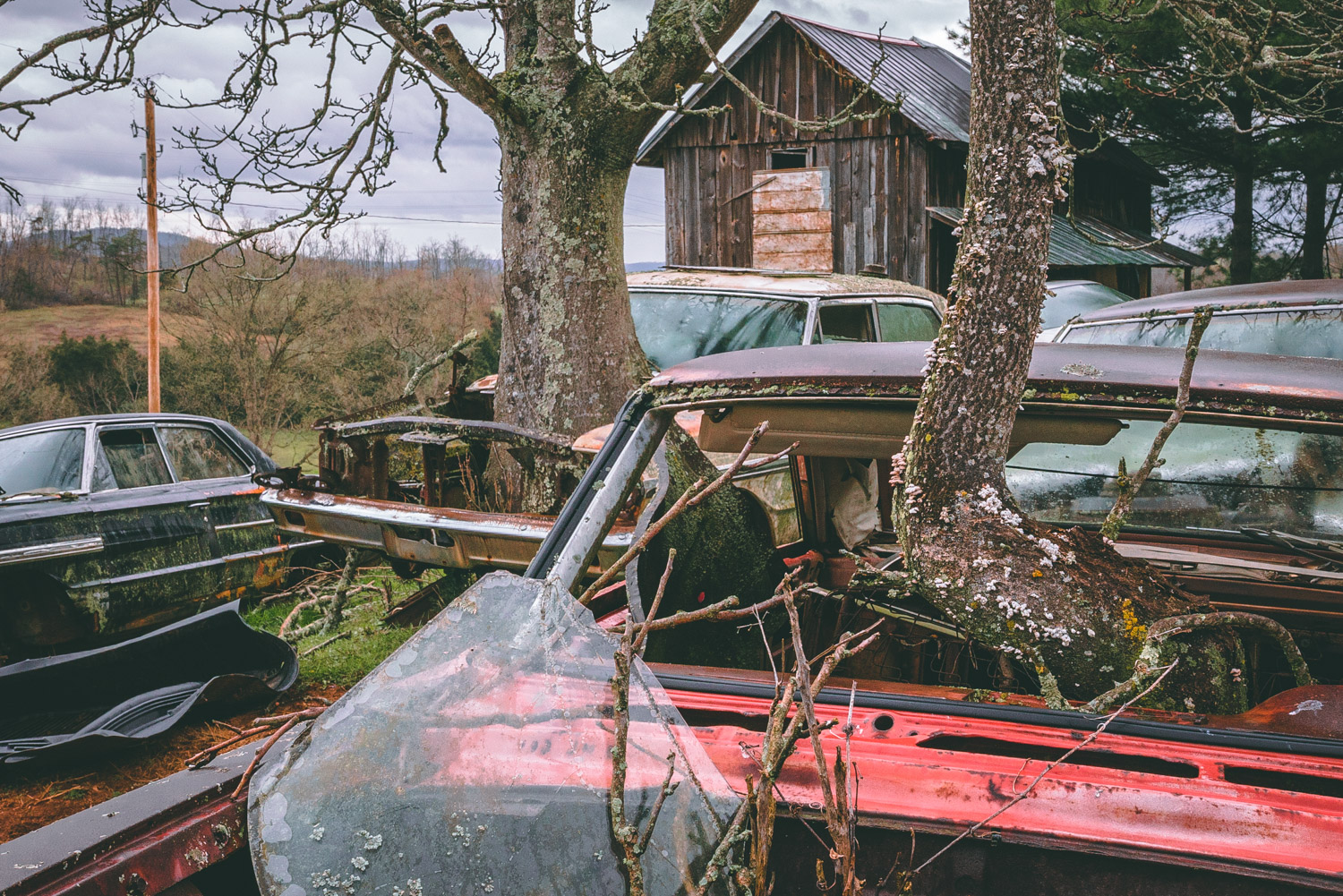 Barn Find Hunter trees through cars in yard