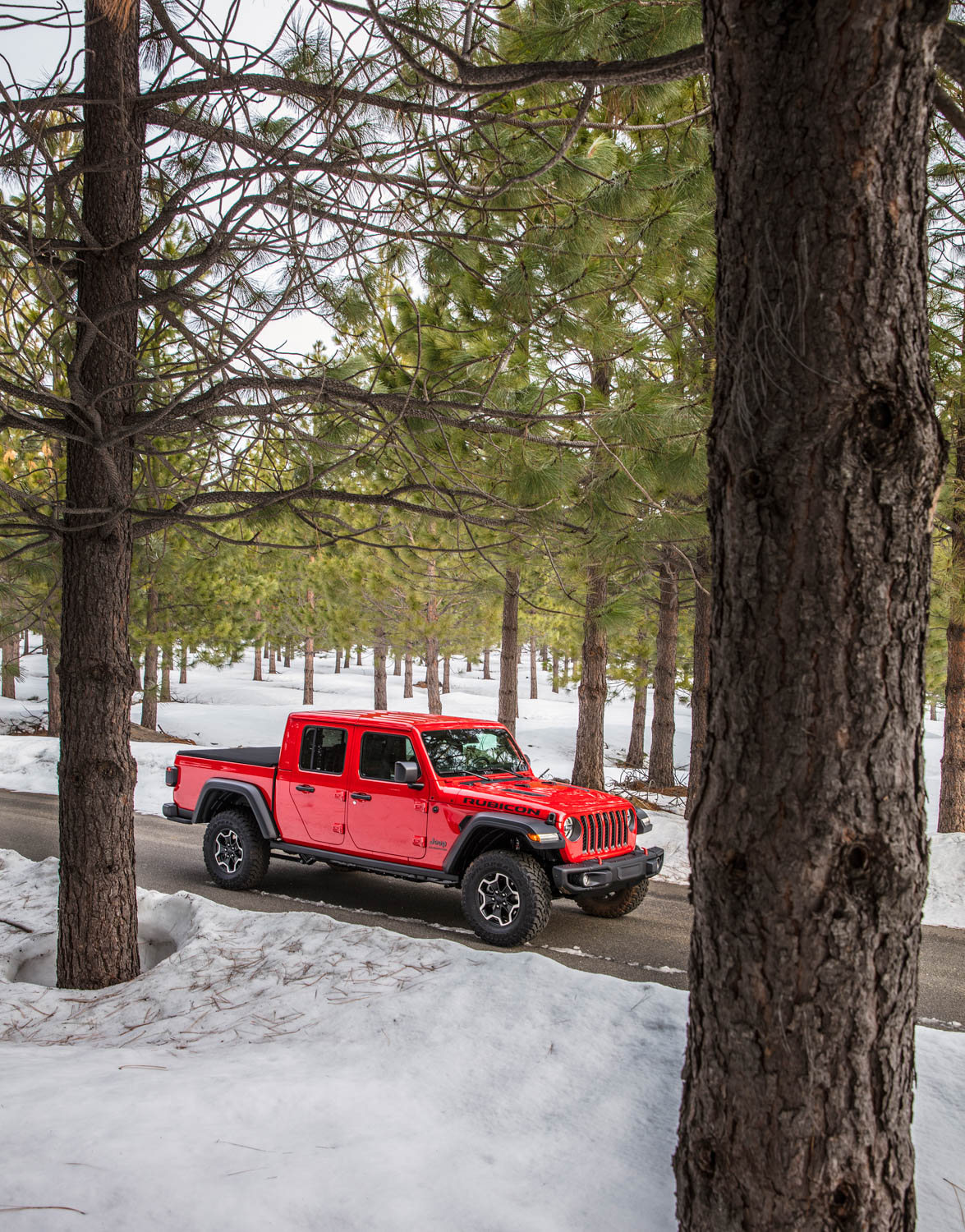 2020 Jeep Gladiator in the woods