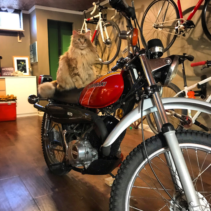 Kawasaki KE175 stored in basement