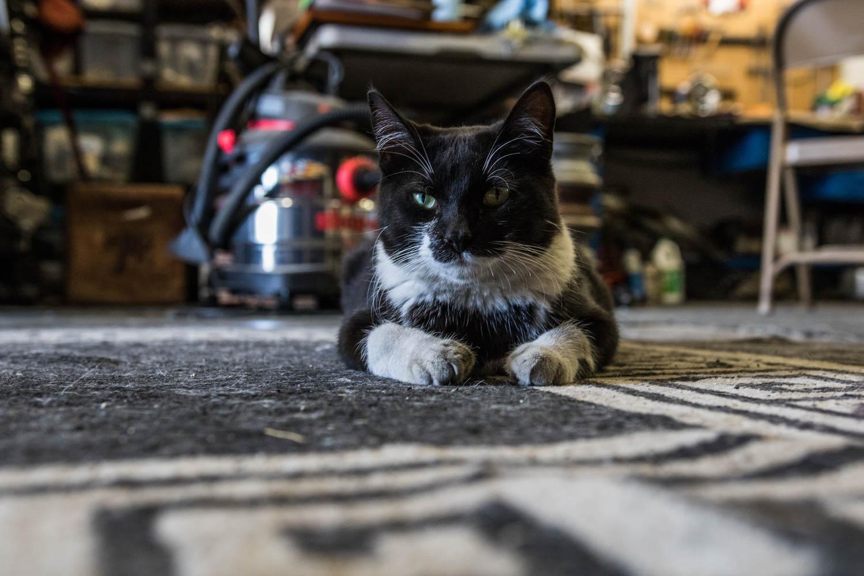 Merciless Mings Shop cat