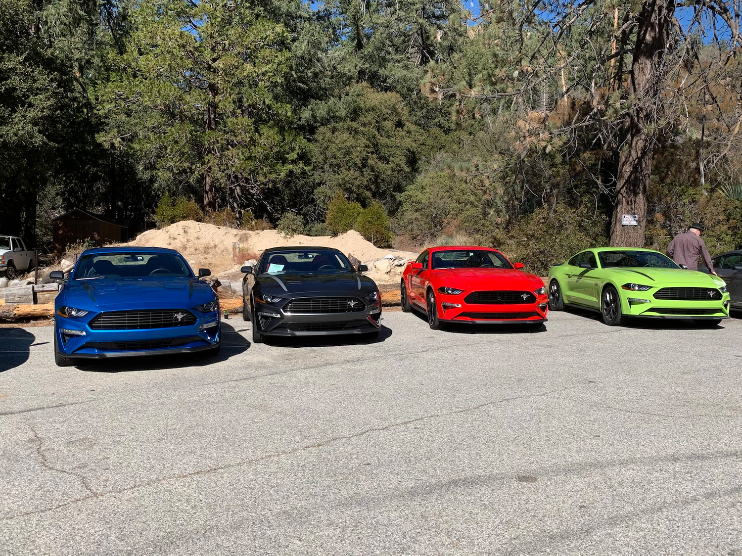 New mustangs in row
